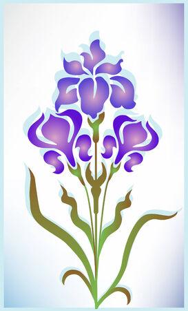 iris flower: iris
