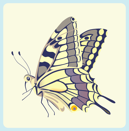 swallowtail: Eastern Tiger Swallowtail butterfly