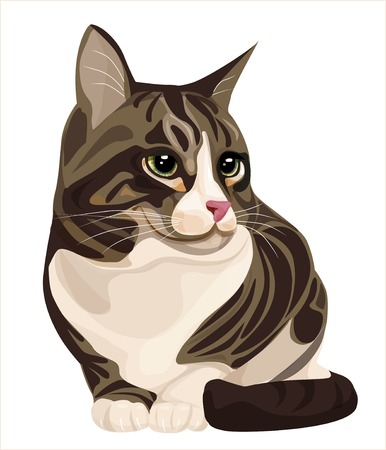sitting cat Illustration