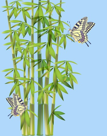 rainforest animals: batterflies  and bamboo