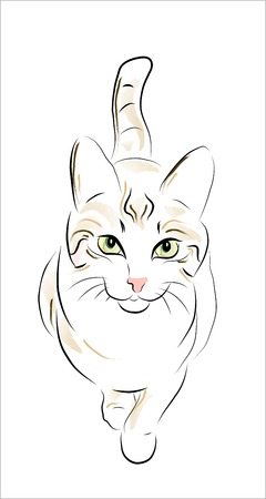 illustration of the tabby cat