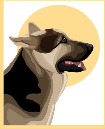 portrait of alsatian shepherd  Stock Vector - 7619978
