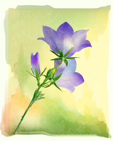 Bluebell fiori Vettoriali