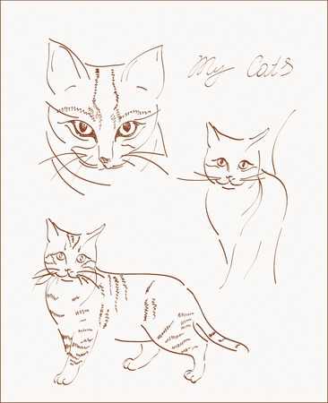 purr: freehand scetchs of domestic cats