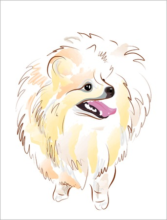 spitz: sketch of spitz