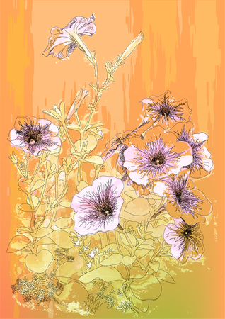 Petunias flowers. Hand drawn  illustration in vintage style Vector