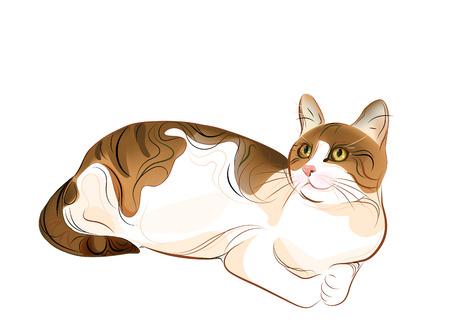 Hand gezeichnete Porträt von Ingwer-Tabby-Katze