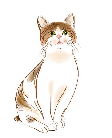 gato atigrado: Retrato de jengibre Gato dorado