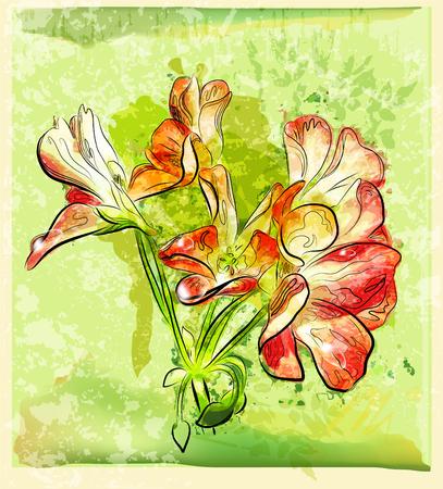 hand drawn red geranium flower Vector