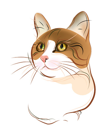 hand drawn portrait of  ginger tabby cat Vector