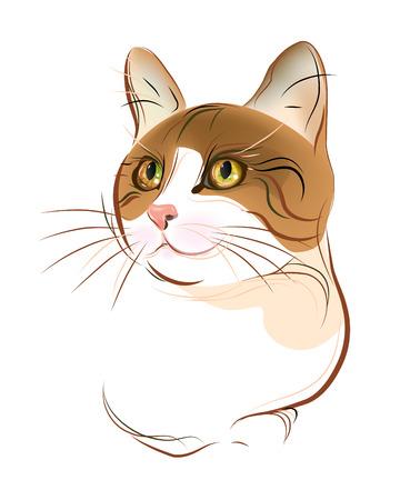 Retrato dibujado de mano de jengibre gato tabby