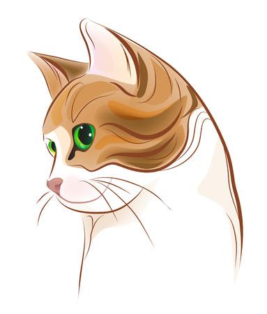 gato atigrado: Retrato dibujado de mano de jengibre gato tabby