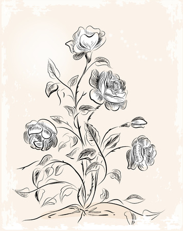 rose bush: vintage greeting card with roses Illustration