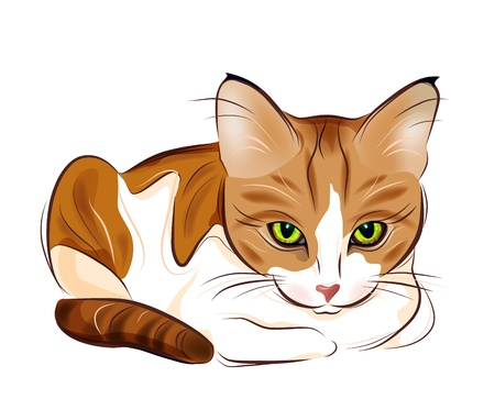 gato atigrado: Retrato dibujado mano de jengibre gato Tigres