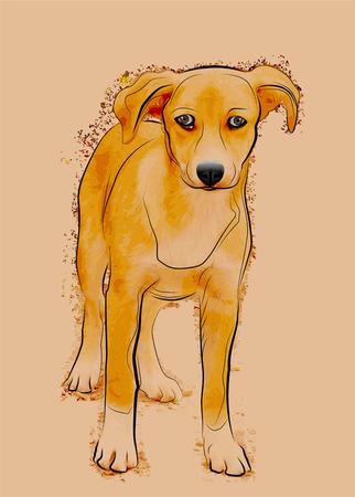 animal shelter: portrait of homeless stray dog