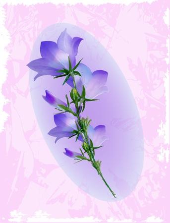 bluebell: Bluebell. Design for album cover