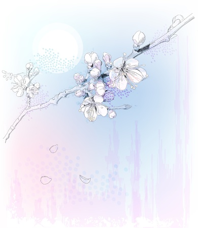 cherry blossoms in full bloom Ilustrace