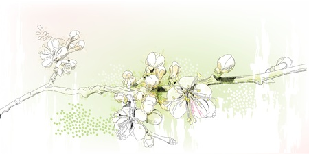 peach tree: cherry blossoms in full bloom Illustration