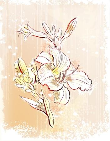 shabby outline Illustration of  the white lily   イラスト・ベクター素材
