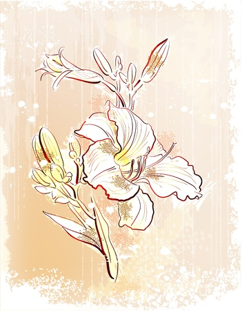 shabby outline Illustration of  the white lily  Ilustrace