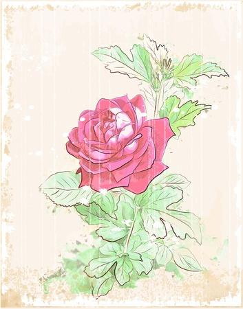 scribbling: vintage red rose Illustration