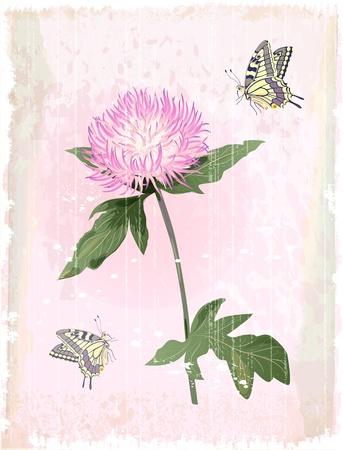 pink aster flower Vector