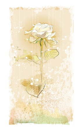 rosa bianca vintage