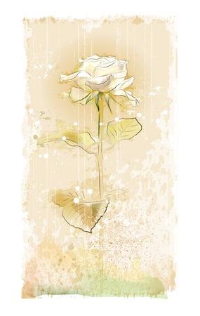 vintage witte roos Stock Illustratie