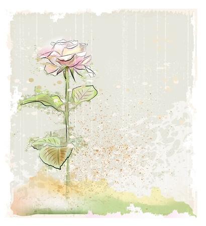 vintage illustration of pink rose Vector