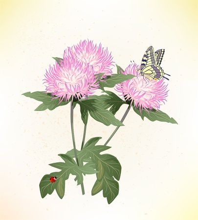 pink asters and butterfly Vector