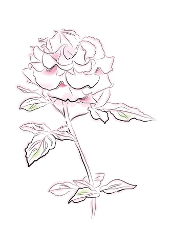 vintage illustration of pink rose Vector
