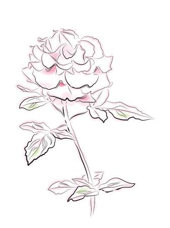 vintage illustration of pink rose Stock Vector - 9722200