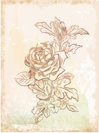 ローズの手描きのビンテージ スケッチ  イラスト・ベクター素材
