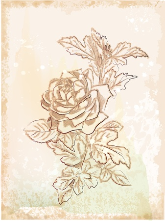 hand drawn vintage sketch of  rose