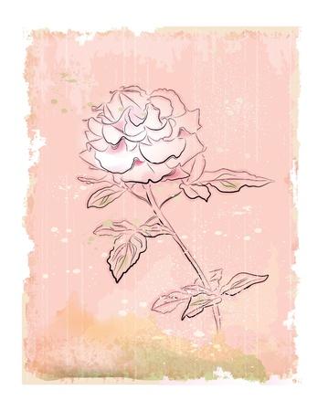 vintage white rose Vector