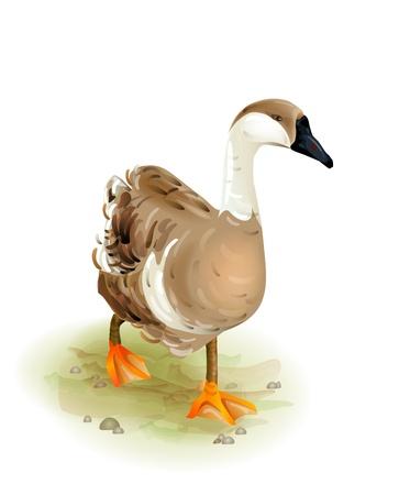 Wandelen binnenlandse goose.Watercolor stijl