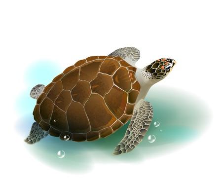 tortuga caricatura: Tortuga nadando en el mar