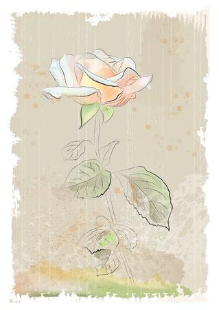 scribbling: vintage illustration of  pink rose