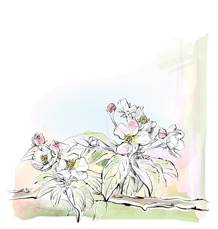 aquarelle: sketch of apple tree in bloom Illustration