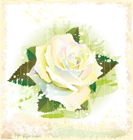 vintage illustration of white rose Stock Vector - 14093429