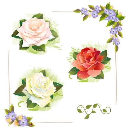 ivy vine: Set of roses. Vintage style. Imitation of watercolor painting.