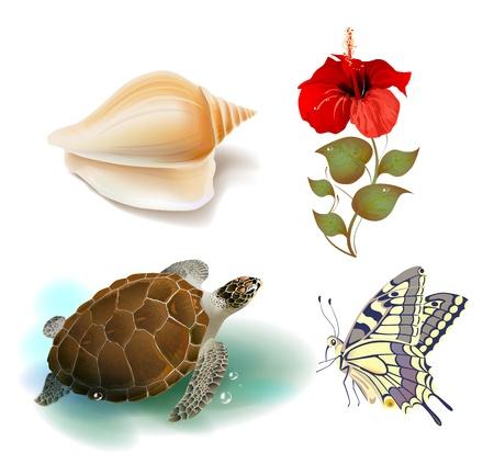 aqueous: set di icone realistici tropicali Vettoriali