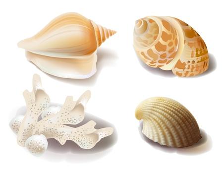 turismo ecologico: conjunto de conchas marinas y corales Vectores