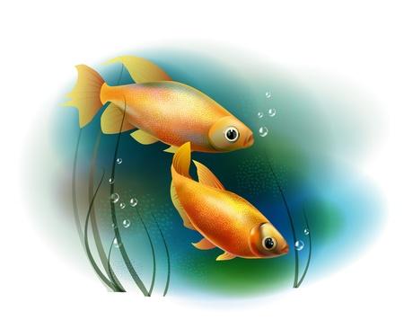 aquarian fish: couple of goldfish in the sea Illustration