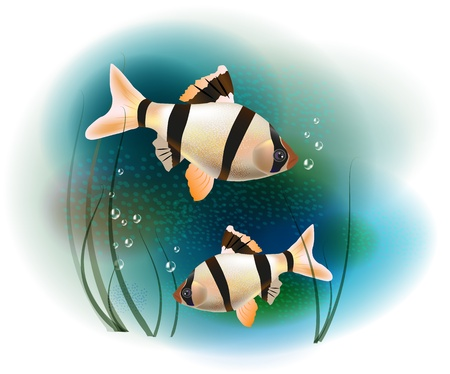 barbus: couple of fish in the sea Illustration