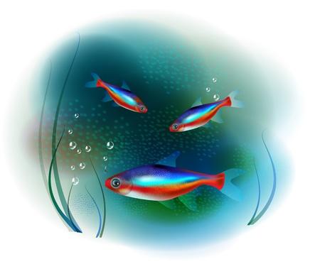 aquarian fish: neon fish in the sea