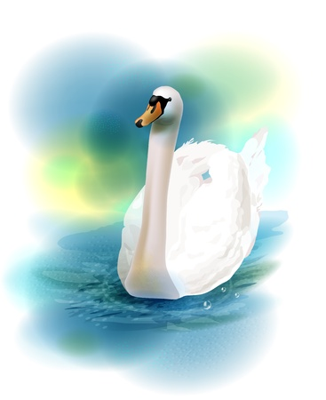 illustration of the white swan Stock Vector - 17562307
