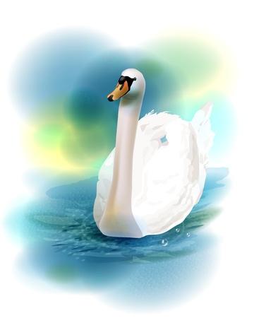 cisnes: ilustración del cisne blanco