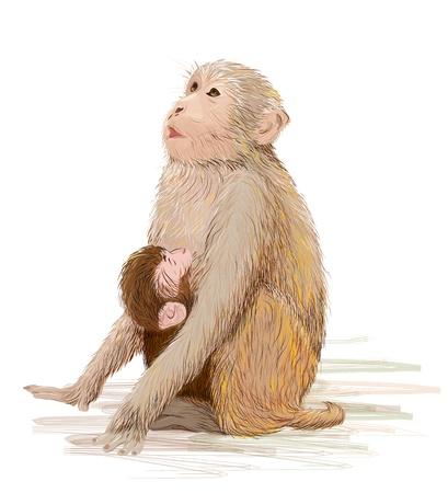 nursing mother: hand drawn illustration of  the monkey feeding newborn baby