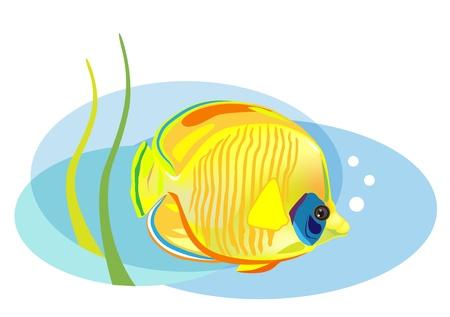 aquarian fish: cartoon tropical fish